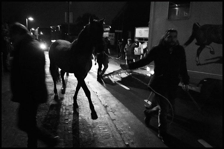 Jan Nabuurs Paardenmarkt Lottum 2020 (2)