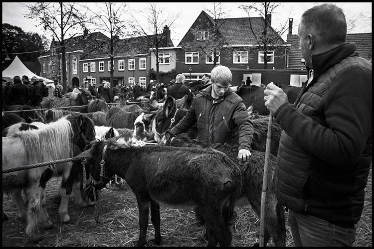 Jan Nabuurs Paardenmarkt Lottum 2020 (4)