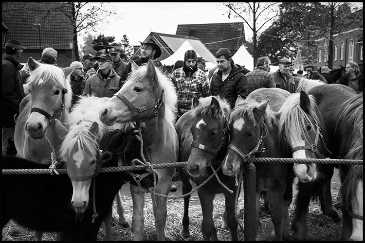 Jan Nabuurs Paardenmarkt Lottum 2020 (6)