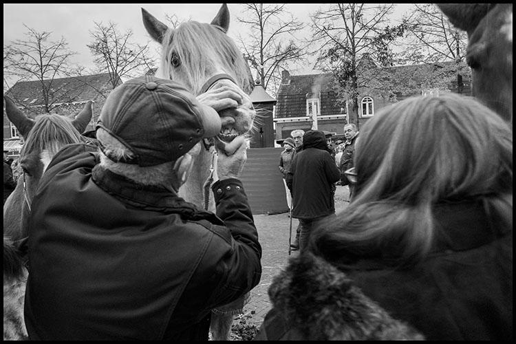 Jan Nabuurs Paardenmarkt Lottum 2020 (7)