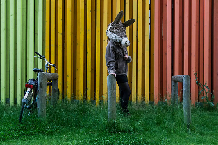 color donkey